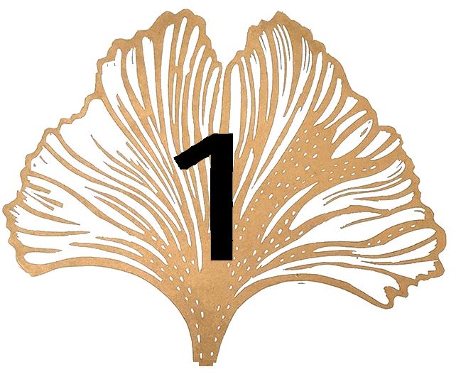 Satochip ginkgo leaf #1