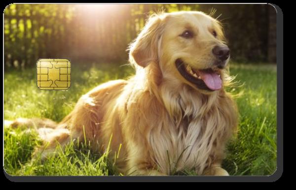 Satochip hardware wallet - Create your own design - Print your dog on your hardware wallet